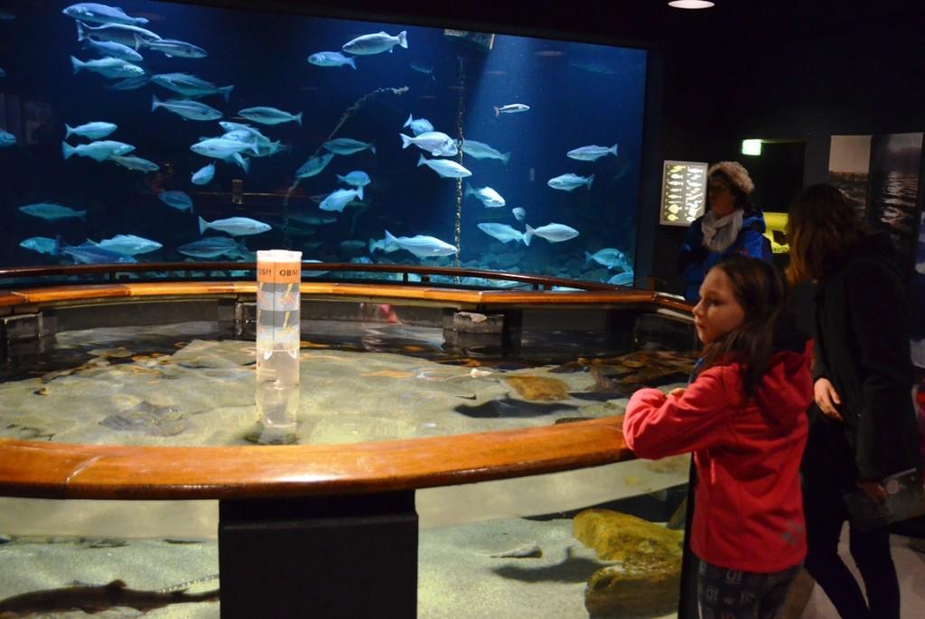 Aquarium Zeevaart- en Visserijmuseum Esbjerg
