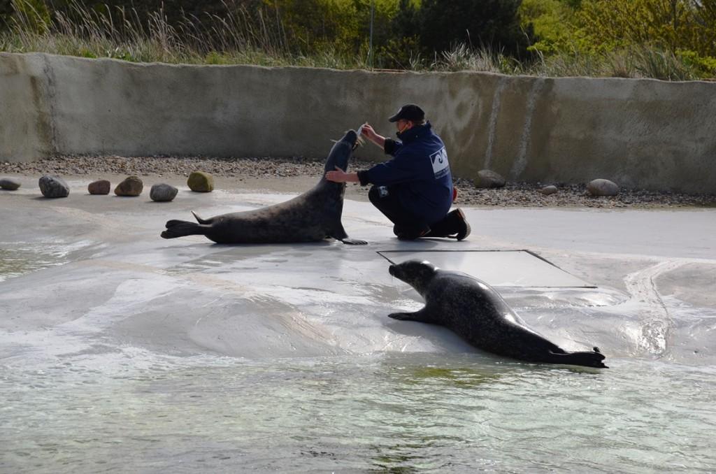 Zeehonden in Zeevaart- en Visserijmuseum Esbjerg