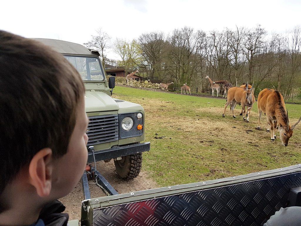 Dierentuin in Denemarken Ree Park Safari